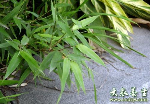 竹叶的功效与作用